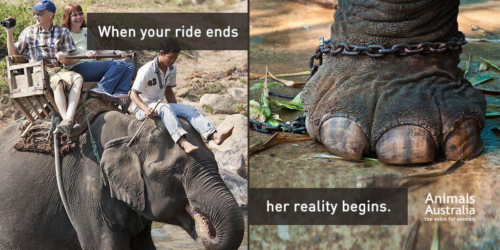 Traitement des éléphants